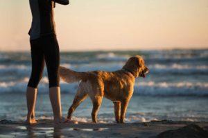 3 načina kako već u ovom trenutku poboljšati ponašanje vašeg psa